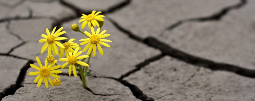 Flower emerging from cracked earth